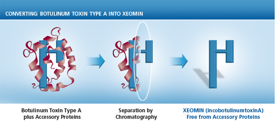 botox and xeomin have the same basic protein structure but botox has